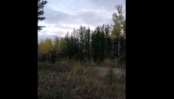We Have No Idea What Is This Strange Howling Sound Coming From The Forest