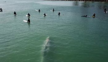 Watch This Whale Swim Under These Unsuspecting Surfers