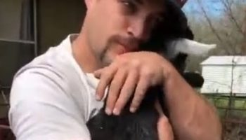 This Video Of A Man Hugging Baby Goats Is The Sweetest Thing You'll See Today