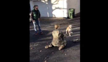 Dog Has Delayed Reaction Recognizing Owner Who's Been Away For Military Service, Does A Whole 180 When He Finally Does