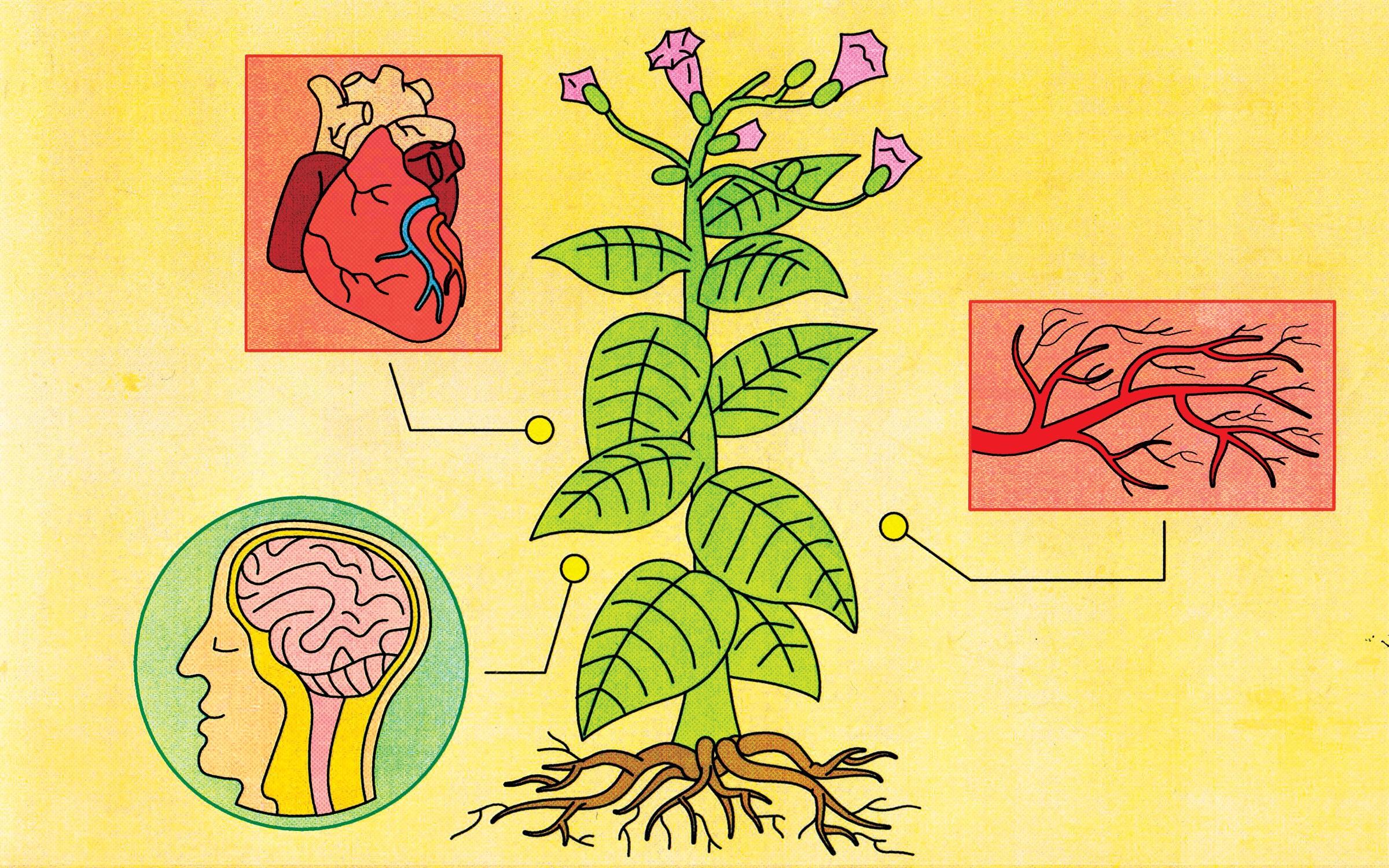 Your Brain On Nicotine