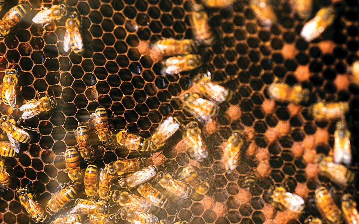 Can Bee Stings Treat Lyme Disease?