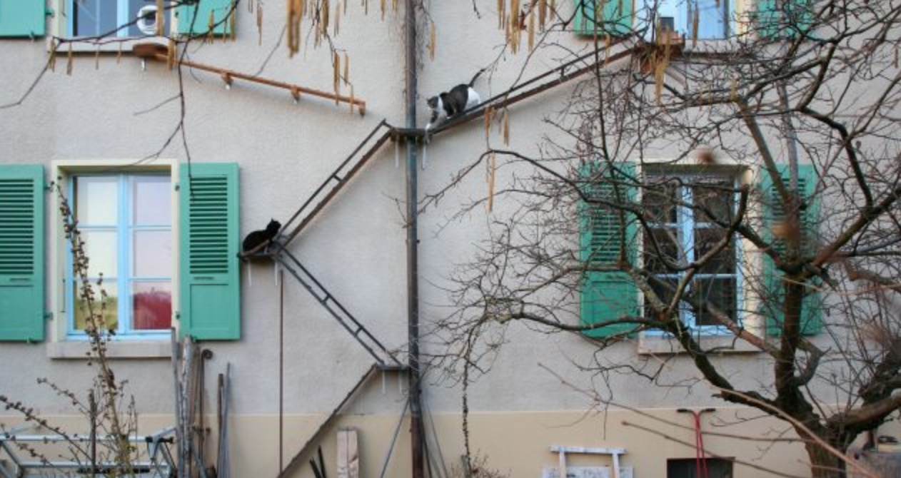 Swiss Cat Ladders: Deconstructing Feline-Friendly Infrastructure
