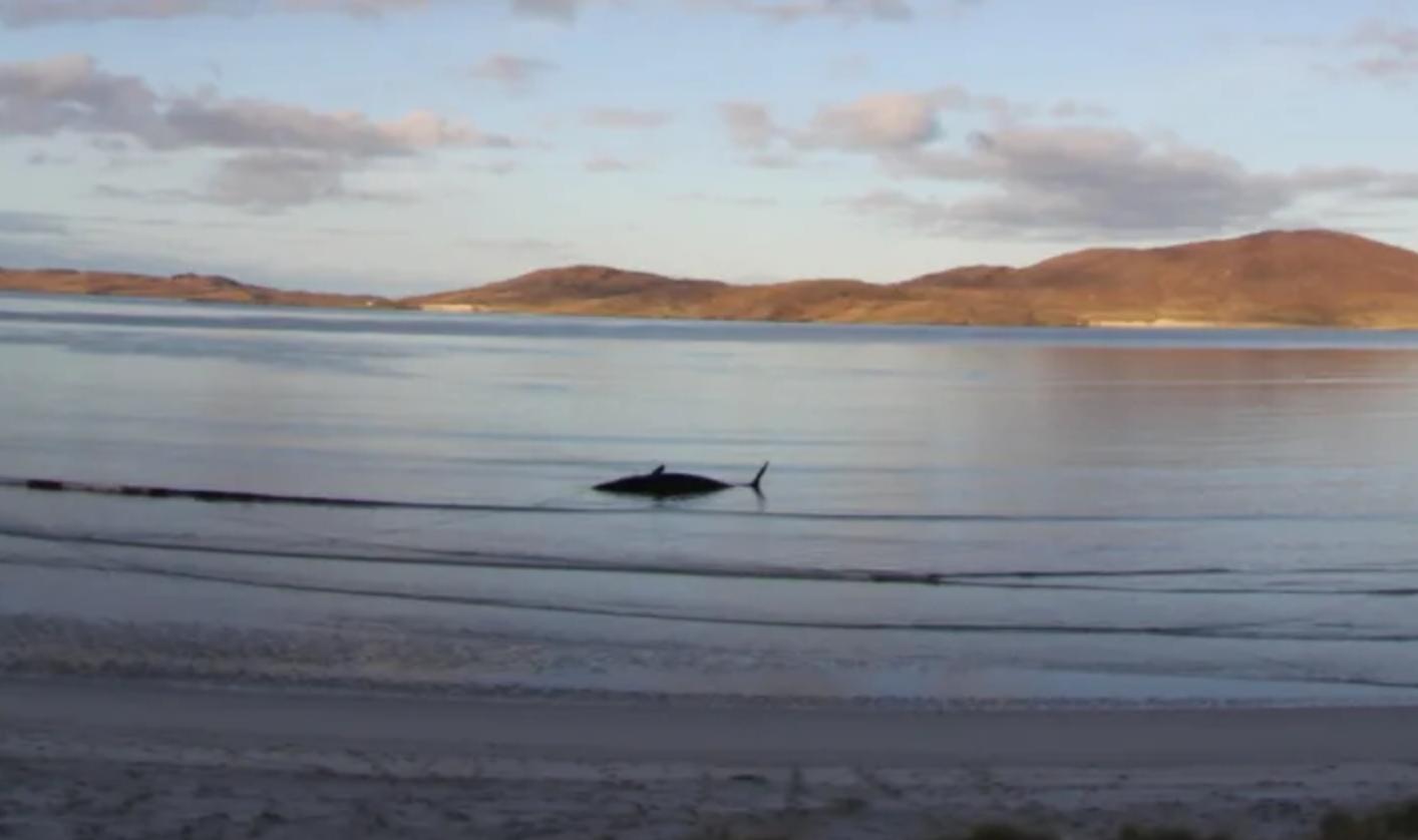 'Horrific' 220-Pound Ball Of Plastic Found In Dead Sperm Whale