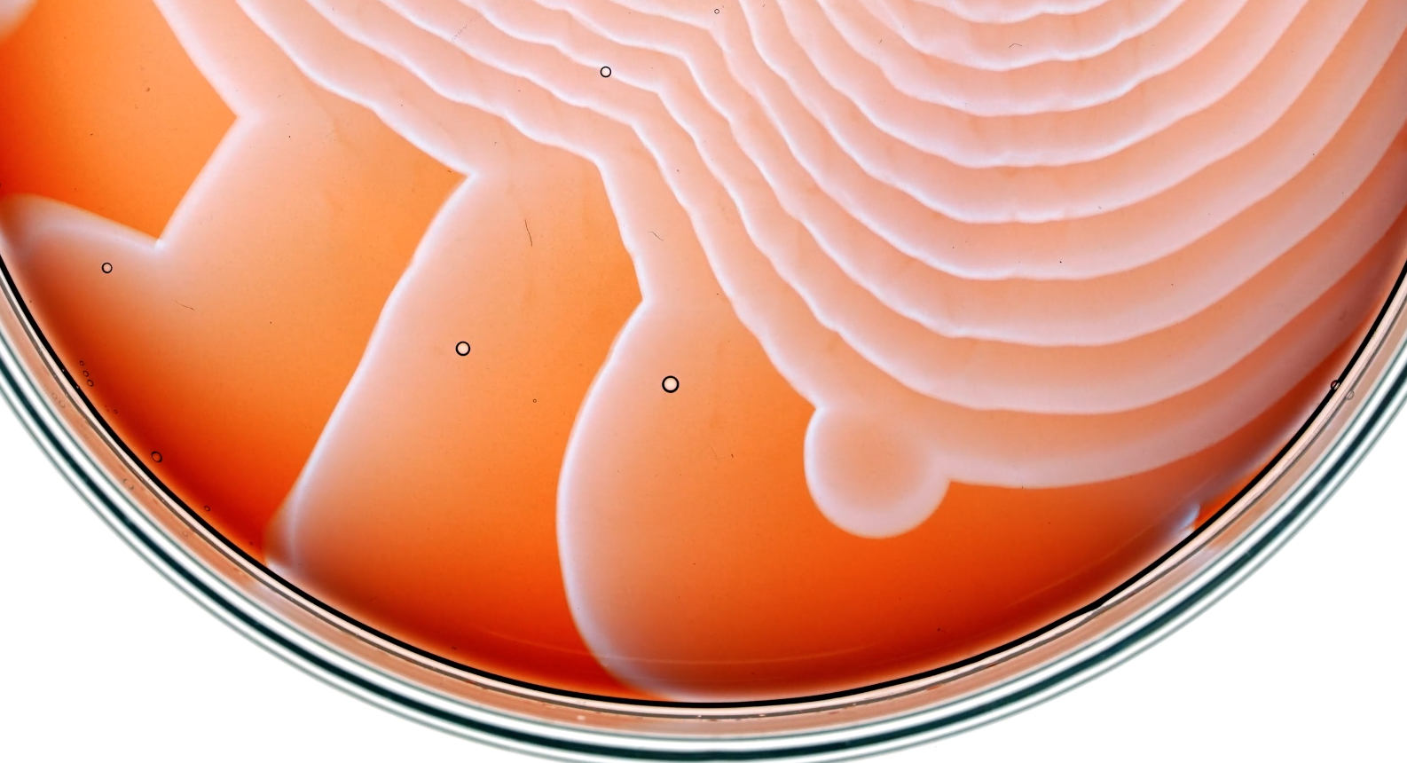 This Time Lapse Of A Chemical Reaction Unfolding Through A Petri Dish Is Deeply Satisfying