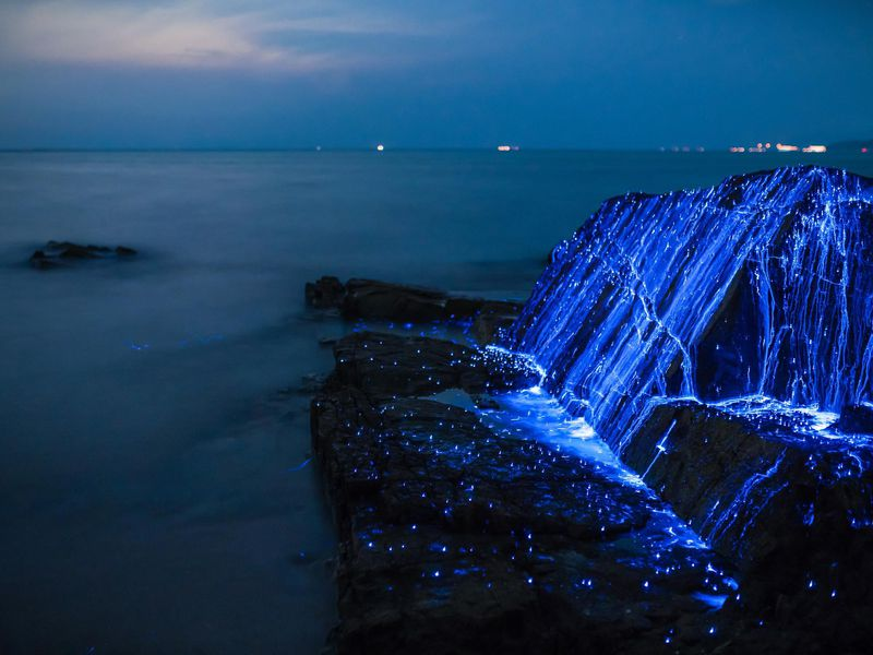 How Studying Bioluminescent Creatures Is Transforming Medical Science