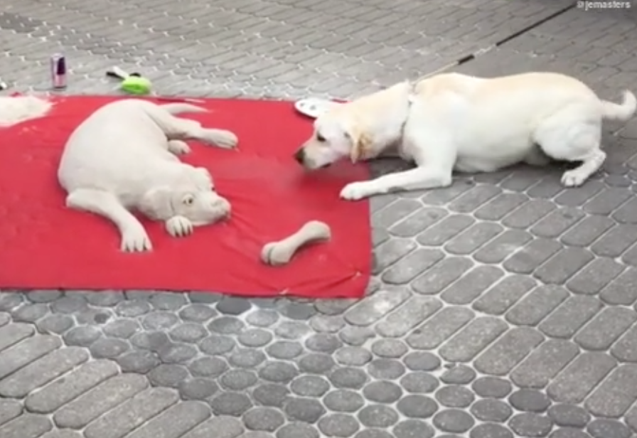 Dog Walks By Realistic Dog Sand Sculpture, Is Completely Baffled