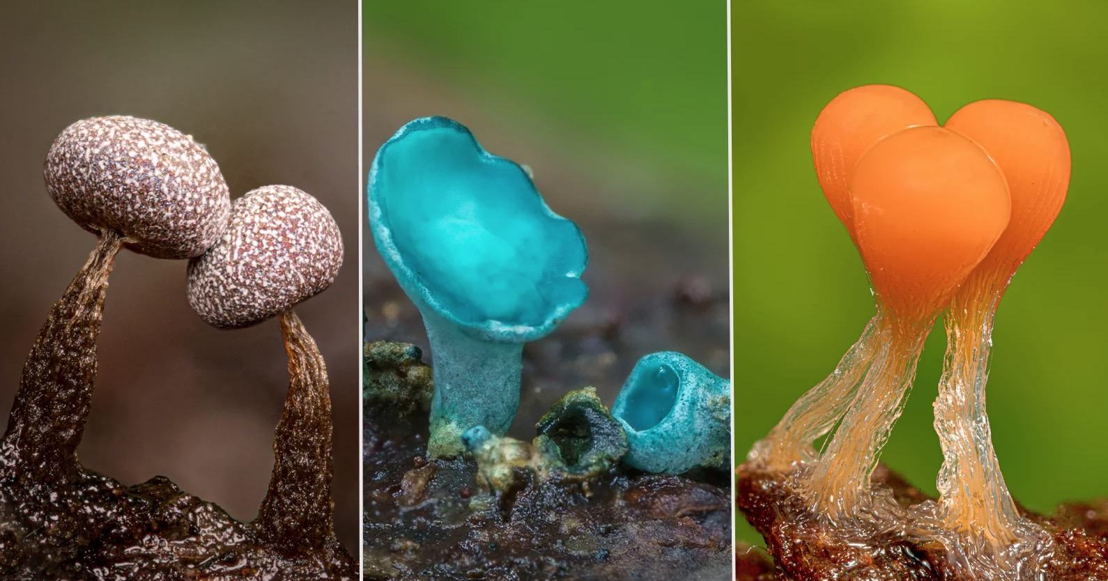 Stunning Super Macro Photos Of Minuscule Mushrooms And Fungi