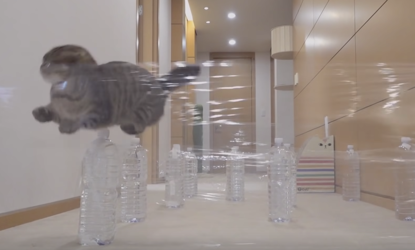 Please Watch These Cats Find ically Innovative Ways To Make Their Way Through An Invisible Maze