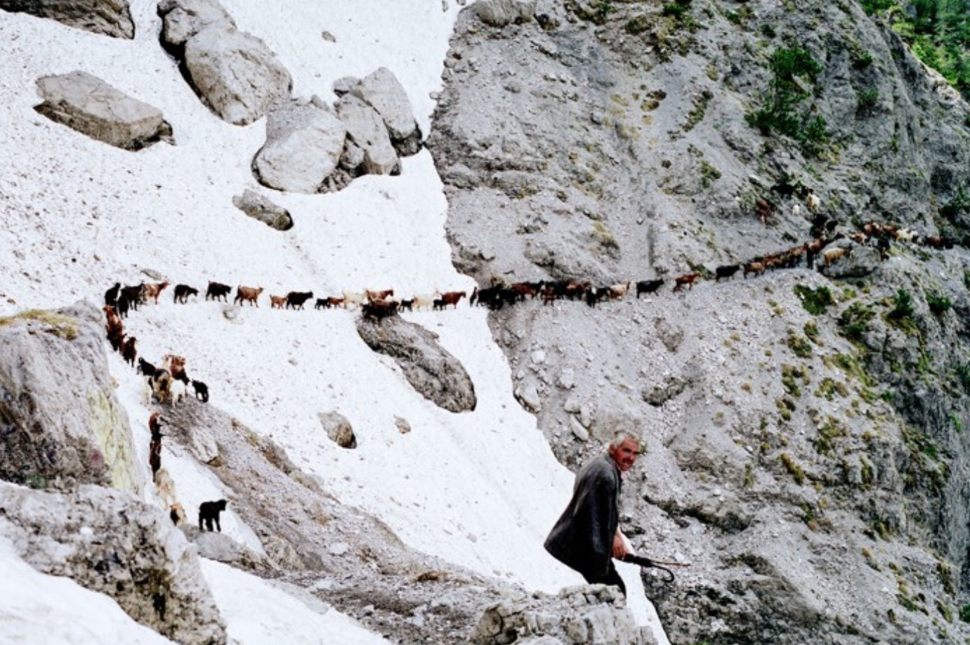 Watch A Goatherder's Astounding Journey Through The Alps In This Short Documentary