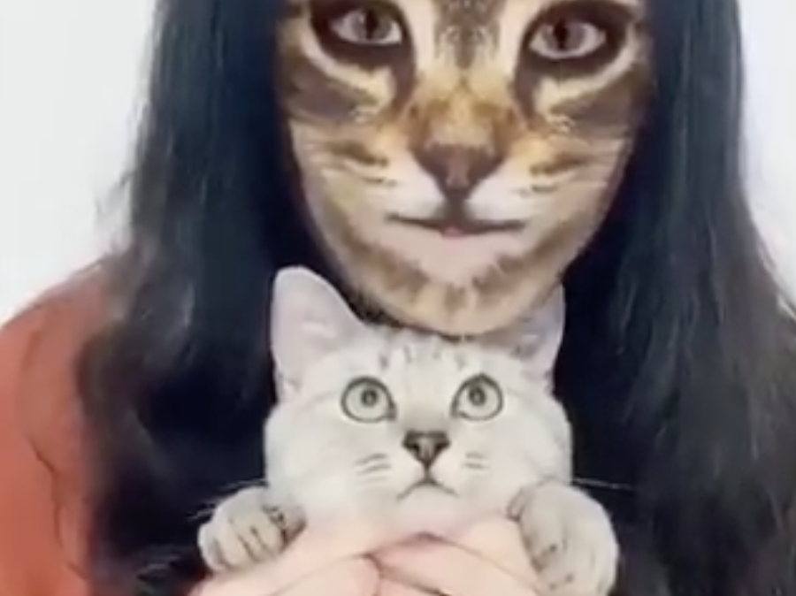 These People Filmed Cats Reacting To The Cat Face Filter And There Are No Words