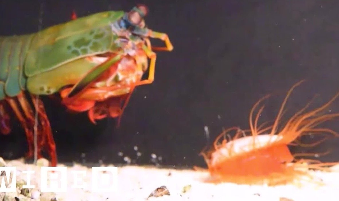 The Fascinating Way That A Disco Clam Uses Its Naturally Emitting Light Show To Stun Its Enemies