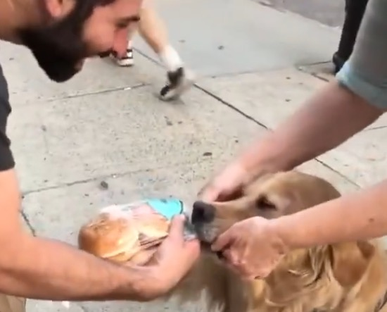 This Dog Will Not Let Go Of These Hamburger Buns And It's The Most Delightful Thing You'll See Today