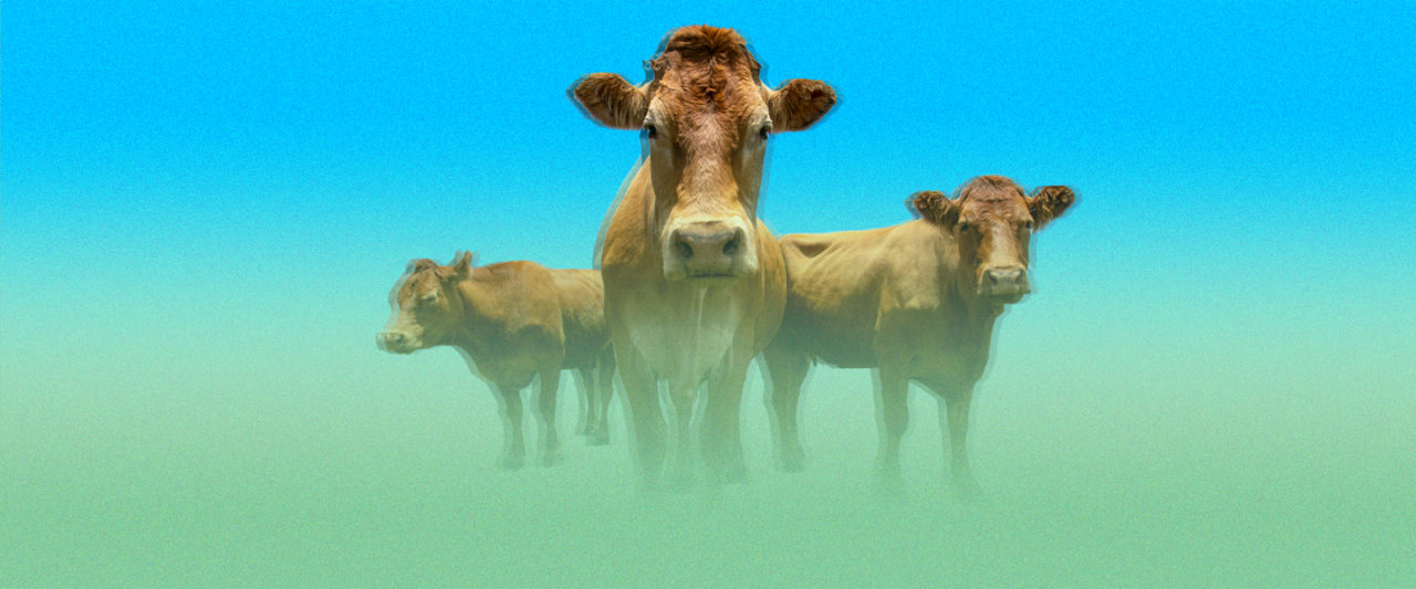 In A Meat-Free Future, What Would Happen To All The Cows, Pigs and Chickens?