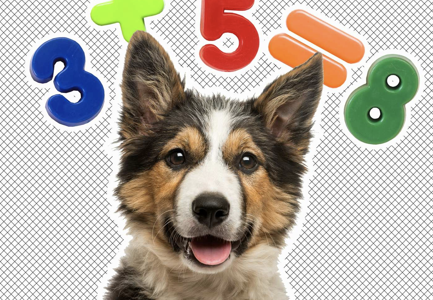 Your Dog May Be Better At Math Than You Are