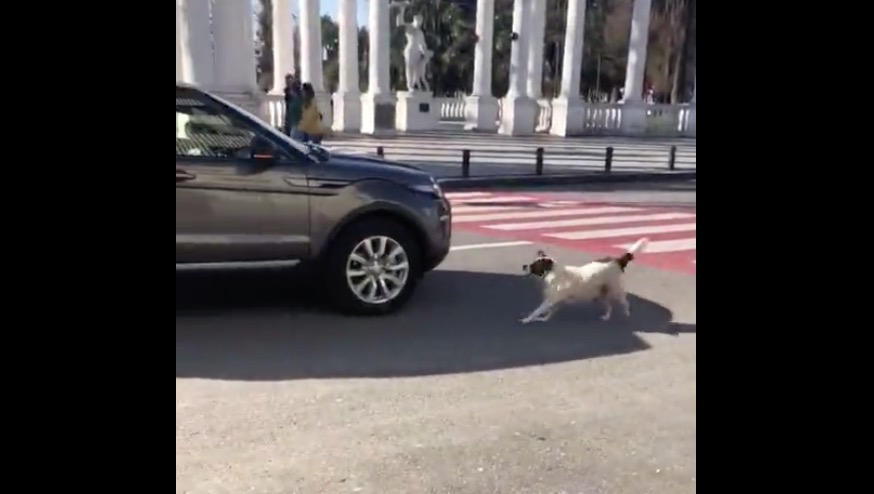 Stray Dog Is Feeling A Bit Overprotective, Becomes A Crossing Guard For Kindergartners