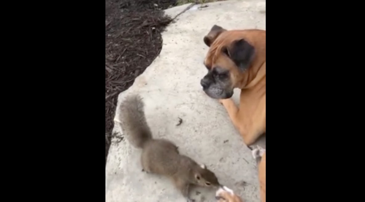 Highly-Trained Service Dog Is Completely Unmoved By Naughty Squirrel