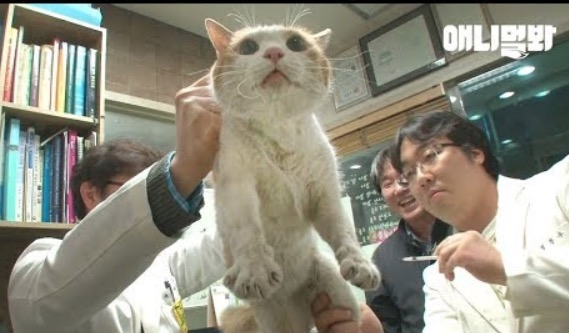 Good Samaritans Rescue Cat That's Been Trapped Inside A Wall For Two Years