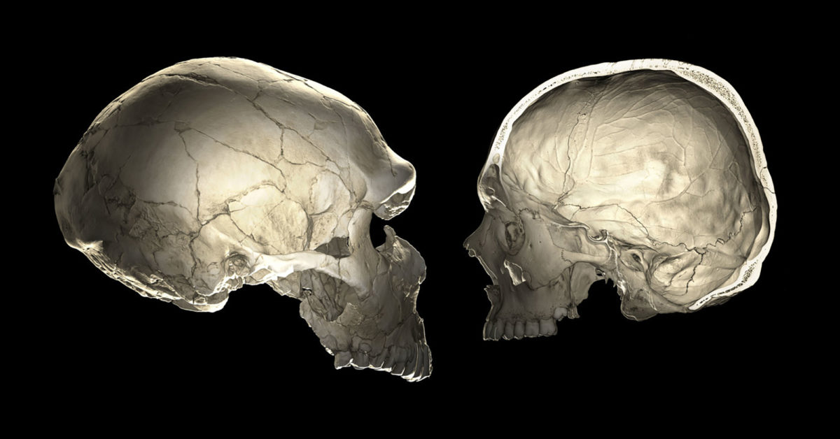 Were Neanderthals More Than Cousins To Homo Sapiens?