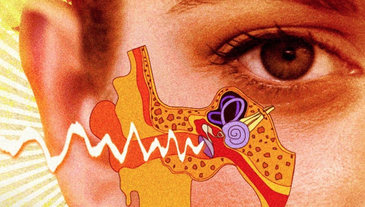 What's Inside A Human Ear?