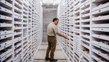 Thousands Of Fossils Sit Forgotten In Museum Drawers. How One Paleontologist Is Changing That