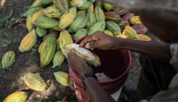The Bitter Side Of Cocoa Production