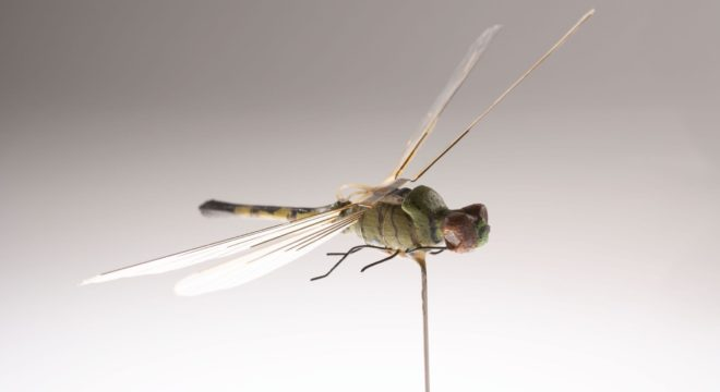 In The 1970s, The CIA Created A Robot Dragonfly Spy. Now We Know How It Works