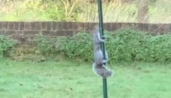 This Video Of A Birdseed-Stealing Squirrel Being Defeated By A Greased Pole Is Perfect