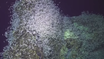 Watch Thousands Of Shrimp React To A 4.7 Earthquake On The Sea Floor