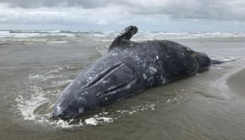 The Strange Influence The Sun Has On Whales