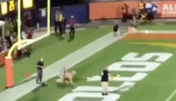 Watch This Dog Tear Across A Football Field And Pull Off A Breathtaking 83-Yard Frisbee Catch
