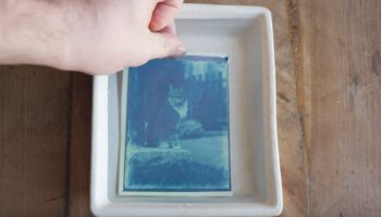 Guy Finds 120-Year-Old Glass Plate Negatives In Time Capsule, Develops Them To Find… Cat Pictures
