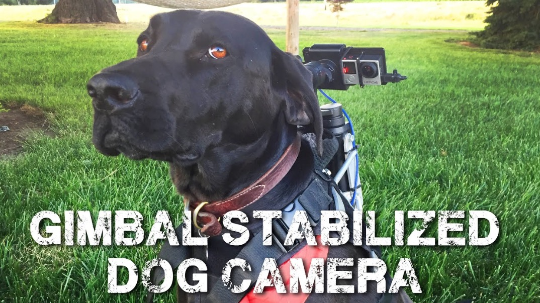 Guy Perfectly Captures His Dog's View Of The World With Stabilized Dog Camera