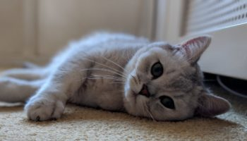 The Internet Of Things Almost Starved My Cat