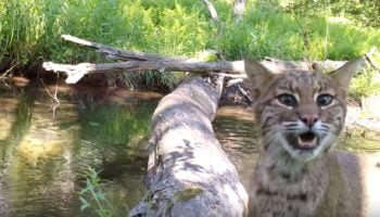 Photographer Sets Up A Camera At A Log That Fell Across A Creek, Captures All The Wildlife That Uses It As A Bridge