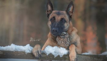 Photographer Captures The Touching Bond Between A Dog And An Owl