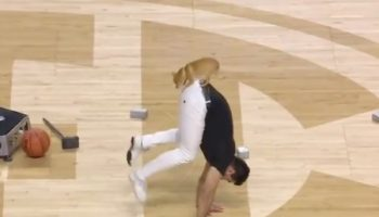 This Acrobatic Chihuahua Gets A 10 From Us For A Flawless Halftime Show At The SEC Women's Basketball Tournament