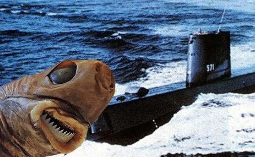 How The Cookiecutter Shark Wreaked Havoc On The US Navy's Sonar Systems
