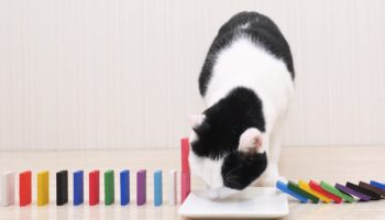 This Viral Video Of Cats Knocking Down Dominos Is The Best Thing On The Internet Right Now