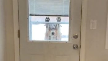 Dog Goes Outside In The Snow, Immediately (But Very Politely) Changes Its Mind