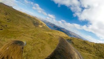 360-Degree Camera Attached To Eagle's Back Reveals Eagle Eye's View Soaring Through Scotland