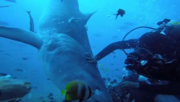 Insane Footage Of A Tiger Shark Latching Onto A Diver's Head — Before Being Fought Off By Other Divers