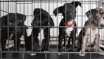 Pet Adoption Is Way Up. But What Happens When Quarantine Ends?