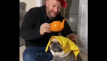 Guy Puts An Interesting Twist To The Tablecloth Trick With His Pug