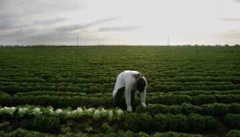Farm Workers Are In The Coronavirus Crosshairs