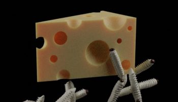 The World's Most Dangerous Cheese