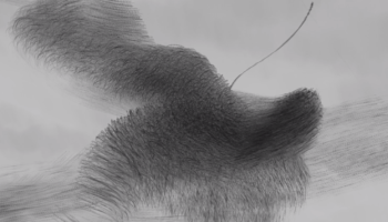 Photographer Traces The Flight Patterns Of Thousands Of Starlings In Mesmerizing, Soothing Video