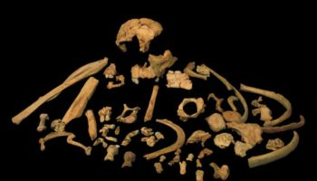 We May Now Know What Our Common Ancestor With Neanderthals Looked Like