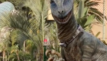 Man Working As A Raptor In Universal Studios Always Tries To Spot His Girlfriend To Say Hi