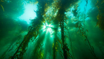 Rising Tides, Troubled Waters: The Future Of Our Ocean